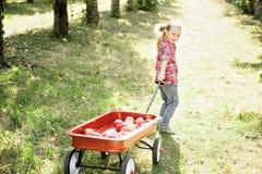 Dziewczyna z Apple w Jabłczanym sadzie obrazy royalty free