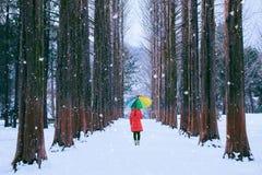 Dziewczyna z colourful parasolem w rzędu drzewie, Nami wyspa w korei południowej Zima w korei południowej obrazy stock