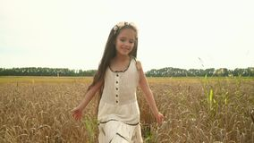 Dziewczyna z długim ciemnym włosy Dziewczyna biega ręki nad pszenicznymi ucho Urocza dziewczyna chodzi na Rosyjskim polu dziewczy zdjęcie wideo
