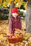 Dziewczyna z jabłczanym koszem w jesieni lasowy pozować, kolorów żółtych liściach i drzewach na tle, Obraz Stock