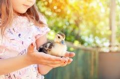 Dziewczyna z kaczątkami w rękach Wielkanocy i wiosny wakacje fotografia stock