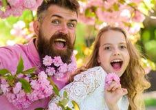 Dziewczyna z tata blisko Sakura kwitnie na wiosna dniu Ojciec i córka na szczęśliwych twarzach bawić się z kwiatami i uściśnięcia fotografia royalty free