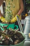 Dziewczyna zasadza lawendowej rośliny fotografia stock