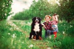 Dziewczynka z psim Bern w wiosna ogródzie Obraz Royalty Free