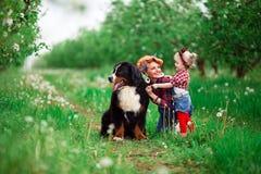 Dziewczynka z psim Bern w wiosna ogródzie Obraz Stock