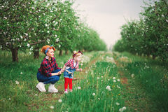 Dziewczynki kobiety wiosna uprawia ogródek i kobieta, dandelions Obraz Stock
