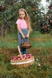 Dziewczyny żniwa ogródu drzew czerwieni menchii zrywania jabłek zielonej trawy kapeluszowy koszykowy tło zdjęcie royalty free