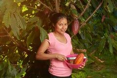 Dziewczyny cacao tnący strąki od drzewa fotografia royalty free