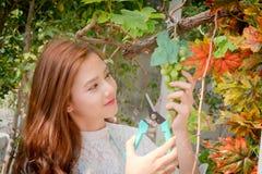 Dziewczyny cięli wiązkę winogron, zieleni i purpur grap, Zdjęcie Royalty Free