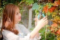 Dziewczyny cięli wiązkę winogrona Fotografia Stock