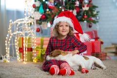 Dziewczyny dziecko świętuje boże narodzenia z psim Jack Russell Terrier przy zdjęcia stock