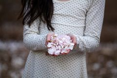 Dziewczyny holdig biel - różowi migdałów kwiaty Obraz Royalty Free