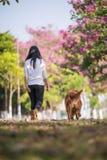 Dziewczyny i złoci aportery biegają na trawie Fotografia Stock