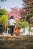 Dziewczyny i złoci aportery biegają na trawie Zdjęcie Stock