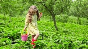 dziewczyny jedzący truskawki zbiory wideo