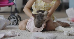 Dziewczyny kładzenie odziewa na kocie zdjęcie wideo