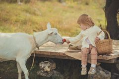 Dziewczyny miło elegancki ubierający w pulowerze z blondynem wydaje czas w wiosce z koszykowy pełnym jabłka karmi zwierzęcego koź obrazy stock