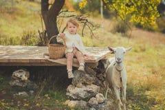 Dziewczyny miło elegancki ubierający w pulowerze z blondynem wydaje czas w wiosce z koszykowy pełnym jabłka karmi zwierzęcego koź fotografia royalty free