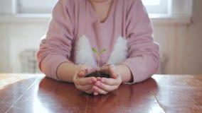 Dziewczyny mienia młoda zielona roślina w rękach Pojęcie i symbol przyrost, opieka, ochrania ziemię, ekologia zdjęcie wideo