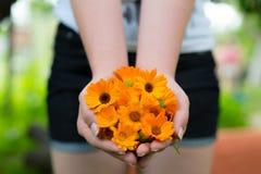 Dziewczyny mienia nagietka kwiaty Obraz Royalty Free