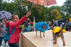 Dziewczyny mienia parasol nad małymi psami 16 09 2018 Fotografia Stock