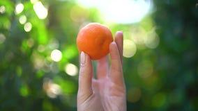 Dziewczyny mienie wewnątrz wręcza soczystą pomarańcze na tle pogodny bloor na słonecznym dniu lub tangerine świecenia i zieleni z zbiory wideo