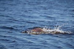 Dziewczyny nicestwienie w fali, doskakiwaniu i zanurzonym w odświeżającym morzu, ocean, na gorącym letnim dniu fotografia royalty free