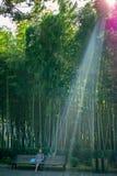Dziewczyny obsiadanie na ławce z telefonem W tle bambusowy gaj Batumi Obraz Stock
