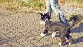 Dziewczyny odprowadzenie z małym śmiesznym psem w parku zdjęcie wideo
