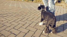 Dziewczyny odprowadzenie z małym śmiesznym psem w parku zbiory wideo