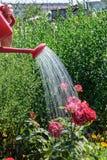 Dziewczyny podlewania rośliny od podlewanie puszek obrazy royalty free