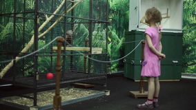 Dziewczyny spojrzenia przy małpą w klatce przy zoo zdjęcie wideo