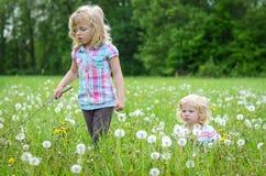 Dziewczyny w dandelion polu Zdjęcia Royalty Free