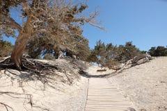 Dziewica krajobraz w Chrissi wyspie, Grecja Zdjęcie Stock
