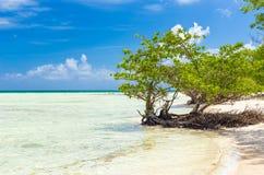 Dziewicy plaża w Kuba obraz royalty free