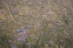 Dzika łąka kwitnie w świetle słonecznym obraz stock