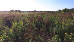 Dzika łąka w jesień widoku od trutnia zdjęcie wideo