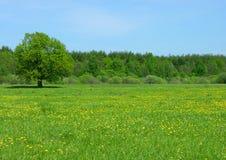 dzika łąki Zdjęcie Royalty Free