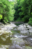 dzika creek Zdjęcie Stock