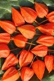 Dzika czerwona owoc w jesieni zdjęcia stock
