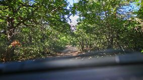 Dzika droga w lesie zbiory wideo