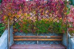 Dzika gronowa altana Zdjęcie Royalty Free