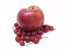 dzika jabłko róża Zdjęcia Stock