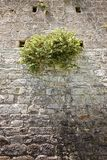 Dzika kapar roślina zdjęcie royalty free