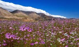 dzika kwiat łąka fotografia stock