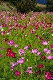 dzika kwiat łąka obrazy royalty free