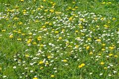 dzika kwiat łąka Fotografia Royalty Free