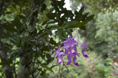 dzika kwiat orchidea Obrazy Stock