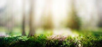 Dzika lasowa panorama zdjęcia royalty free