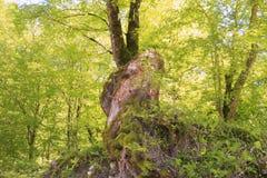 Dzika natura jest fascynującym dżunglą Fotografia Stock